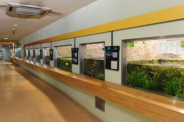 井の頭公園水生物園