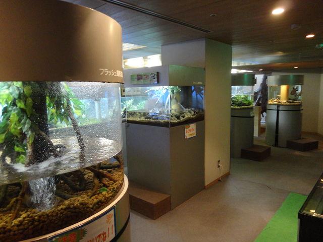 板橋区立グリーンドーム熱帯館