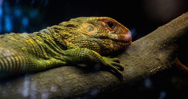 上野動物園両生爬虫類館