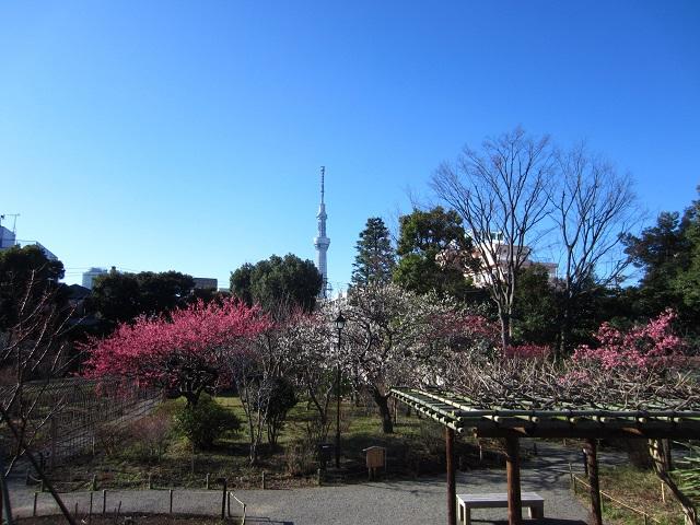 向島百花園の梅まつり