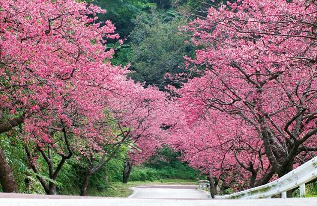 那覇桜まつり