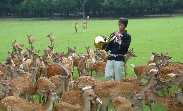 奈良公園 飛火野の鹿寄せ