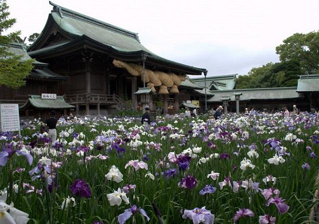 宮地嶽神社の菖蒲まつり
