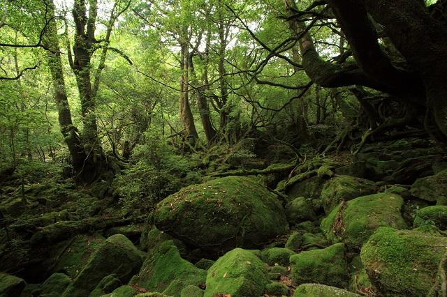 屋久島白谷雲水峡