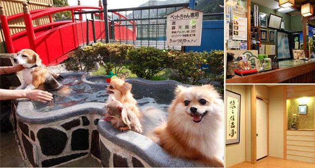 きぬ川国際ホテル_20151208