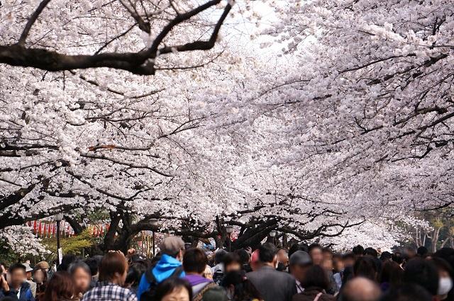 上野公園の「うえの 桜まつり」