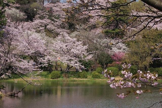 県立三ッ池公園