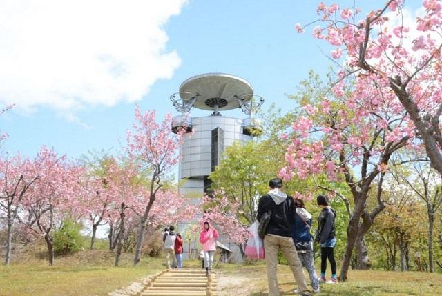 びばい桜まつり