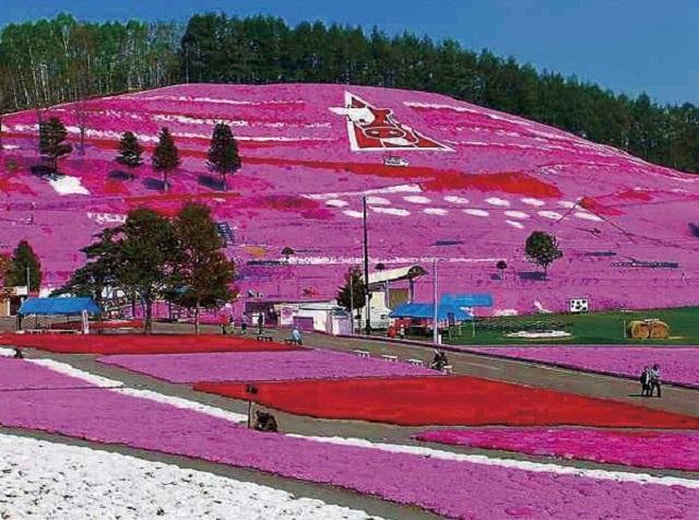 東藻琴芝桜公園の芝桜まつり